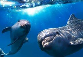 Обои дельфины, море, вода, солнце, взгляды