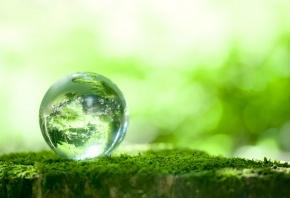шарик, стеклянный, отражение, Зелень, мох