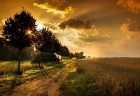 дорога, поле, пшеница, солнце, деревья