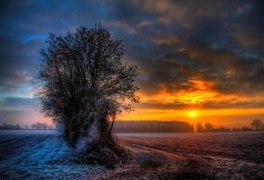 поле, закат, деревья, иней, зима
