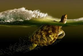 черепаха, море, пузыри, волна, пена