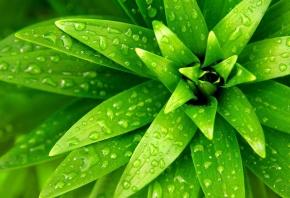 растение, зеленые, листики, елочкой