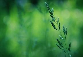 макро, весна, Трава, зелень, боке