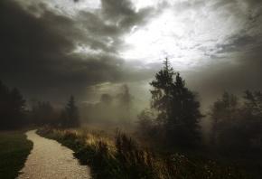 Обои тропинка, деревья, дорожка, трава, туман, лес, тучи