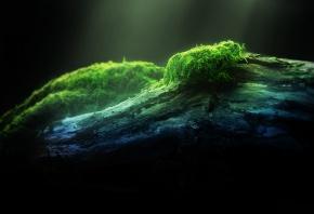 дерево, moss, мох, зеленый, лес, свет