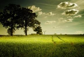 Обои поле, трава, небо, лето, деревья
