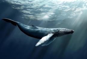Обои море, кит, кашалот, вода, рыба
