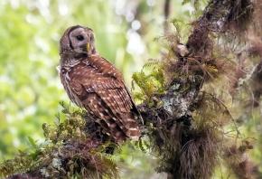Обои сова, лес, природа, Птица, клюв