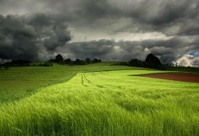 Обои колоски, поле, небо, облака, лето, горизонт