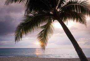 пальма, океан, песок, лето, солнце