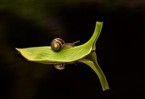 Обои лист, улитка, темная вода, Макро, путешествует, зеленый
