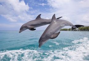 Обои море, дельфины, прыжок, волны, небо, берег