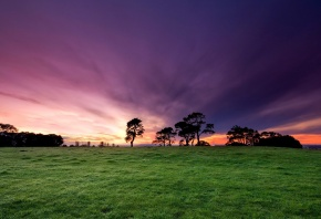 Обои поле, трава, небо, деревья, закат