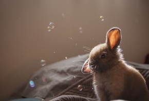 крольчонок, серый, мыльные, пузыри