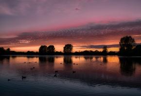 озеро, деревья, утки, птицы, вечер, закат, оранжевое, облака