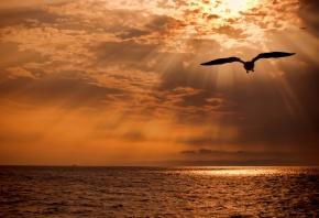 море, тучи, свет, солнце, птица