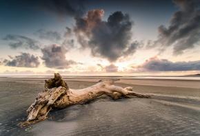 закат, пляж, песок, берег, дерево