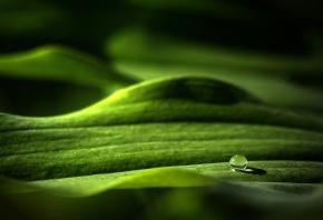 макро, капля, шар, лист, зелень