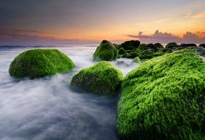 Обои океан, водросли, закат, камни, пляж