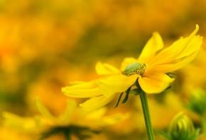 цветок, желтый, природа, макро, листочки