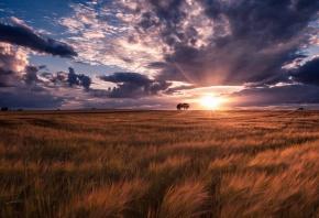 поле, закат, трава, облака, солнышко, лучи