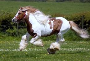 конь, жеребец, скачет, грива, лошадь, поле