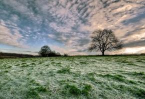 Обои поле, трава, дерево, облака, небо, горизонт