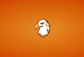 орлан, птица, голова, минимализм, животное, орел