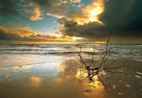 море, ветка, отражение, пена, закат, небо