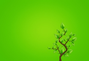 ветка, дерево, листья, зеленоватый фон, минимализм, капли