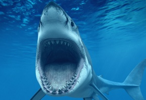 акула, море, челюсти, океан, пасть, зубы, ноздри, страх, рыбка
