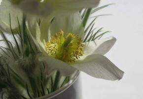 Цветы, подснежники, весна