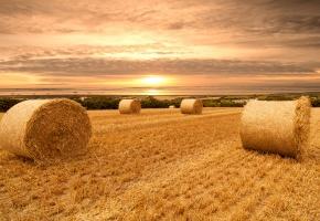 Обои поле, небо, облака, закат, пшеница, сено, снопы