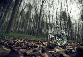 часы, листья, природа, деревья, лес