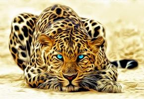 Обои леопард, усы, голубые, глаза, лежит