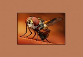 Обои муха, коричневый, смешная, рамка, лапки