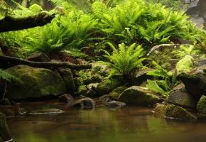 камни, мох, папоротники, вода, коряга
