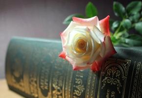 Цветок, роза, фалиант, тиснение