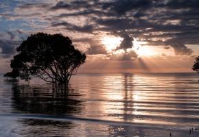 Обои море, закат, дерево, пейзаж
