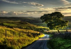 Обои деревья, листья, зелень, трава, забор, ворота, ограждение, холмы, небо, дорога