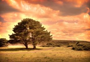 холм, дороги, деревья, тучки, поле