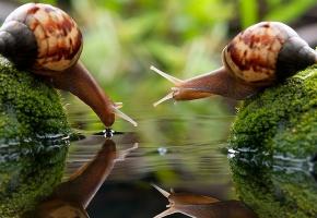 Обои Улитки, мох, вода, макро, капля, рожки