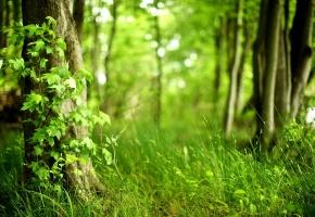 Обои лето, лес, трава, листья, зелень