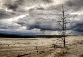 поле, дерево, небо, тучи, дождь, поздняя осень