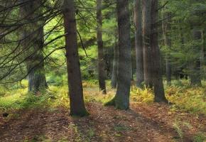 лес, пейзаж, лучи, деревья, дорожки