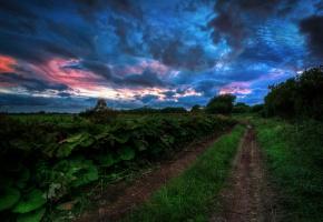 Обои лето, дорога, трава, деревья, небо, хмурое, тучи, вечер