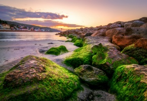 Лайм-Реджис, Англия, Lyme Regis, берег, камни, мох, залив