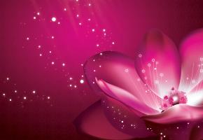Обои пурпур, лепестки, фон, розовый, Цветок