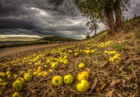 Обои осень, поле, яблоня, яблоки, небо, тучи