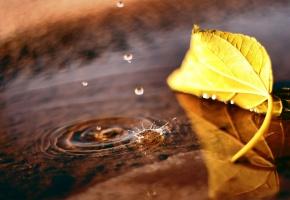 Обои макро, лист, лужа, капли, осень